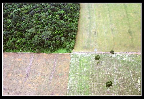 Daugiau dirbamos žemės - mažiau natūralios gamtos