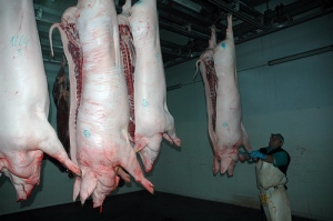 Slaughtered pigs